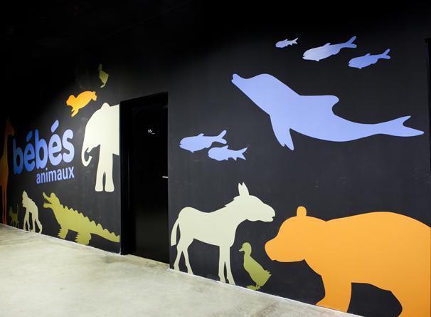 Exposition Bébés Animaux au Muséum de Toulouse